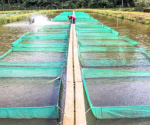fish-farm-business-opportunities.jpg
