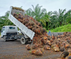 oil-palm-estates-business-opportunities.jpg